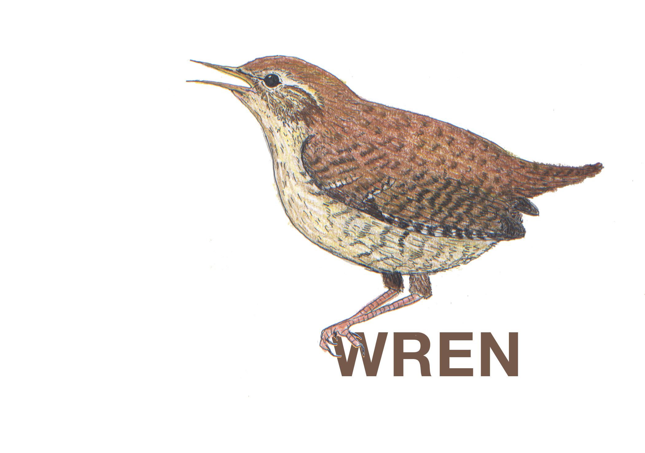 WRENWREN